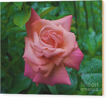 A Rose In Spring Wood Print