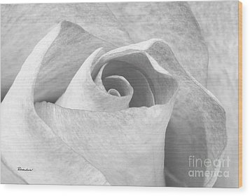 A Rose Is A Rose Black And White Floral Photo 753  Wood Print