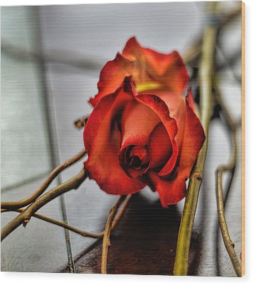 Wood Print featuring the photograph A Rose On Bamboo by Diana Mary Sharpton
