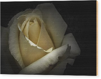 Wood Print featuring the photograph A Rose by Ryan Photography