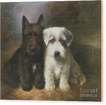 A Scottish And A Sealyham Terrier Wood Print by Lilian Cheviot