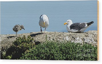 Wood Print featuring the photograph A Seagull Chick With Mom And Dad by Susan Wiedmann