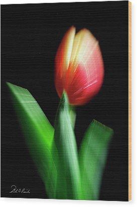 A Single Bloom Wood Print by Frederic A Reinecke