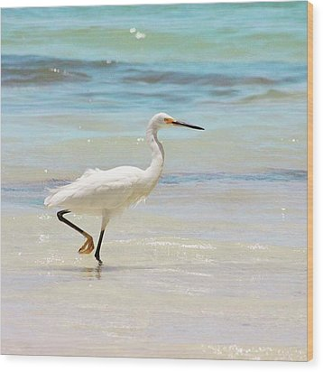 A Snowy Egret (egretta Thula) At Mahoe Wood Print by John Edwards