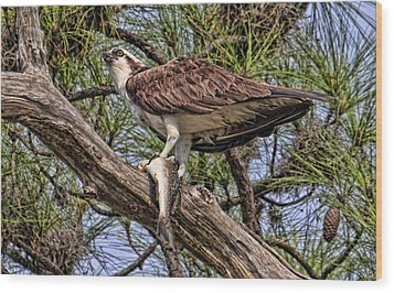 Wood Print featuring the photograph A Speckled Trout Breakfast by HH Photography of Florida