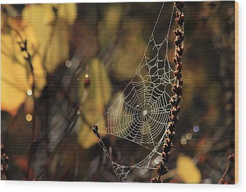A Spiders Creation Wood Print by Karol Livote