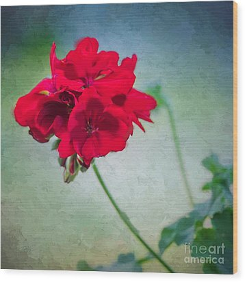 Wood Print featuring the photograph A Splash Of Red by Betty LaRue