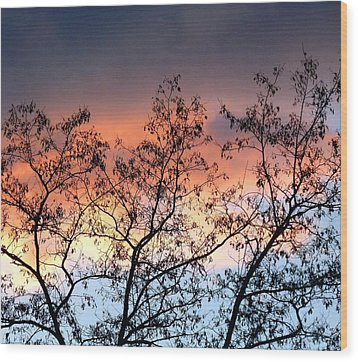Wood Print featuring the photograph A Splendid Silhouette by Will Borden