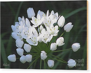 A Spray Of Wild Onions Wood Print by Felipe Adan Lerma