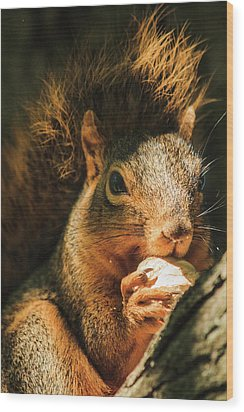 A Squirrel And His Nut Wood Print by Joni Eskridge