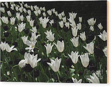 A Study In Black And White Tulips Wood Print