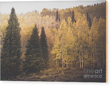 Wood Print featuring the photograph A Subtle Glow by The Forests Edge Photography - Diane Sandoval