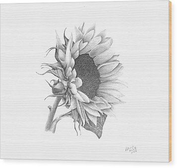 A Sunflowers Beauty Wood Print