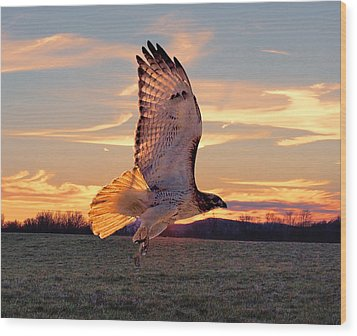 A Sunset Flight Wood Print