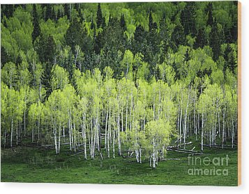 Wood Print featuring the photograph A Thousand Shades Of Green by The Forests Edge Photography - Diane Sandoval