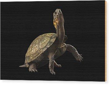 A Threatened Bog Turtle At Zoo Atlanta Wood Print by Joel Sartore