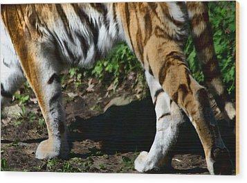 A Tigers Stride Wood Print by Karol Livote