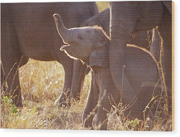 A Tiny Endangered Asian Elephant Calf Wood Print by Jason Edwards