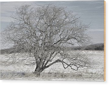 A Tree In Canaan Wood Print by Randy Bodkins