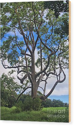 Wood Print featuring the photograph A Tree In Paradise by DJ Florek