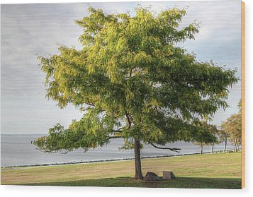Wood Print featuring the photograph A Tree In The Park Bristol Ri by Tom Prendergast