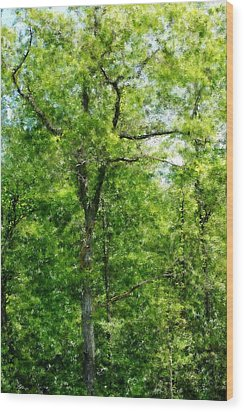 A Tree In The Woods At The Hacienda  Wood Print by David Lane