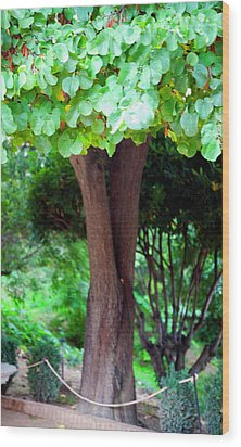 Wood Print featuring the photograph A Tree Lovelier Than A Poem by Madeline Ellis