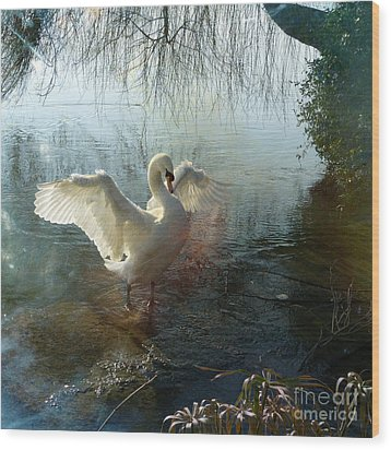 A Very Fine Swan Indeed Wood Print