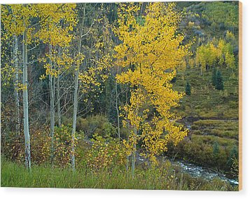 A Walk In The Aspen Forest Wood Print by Tim Reaves