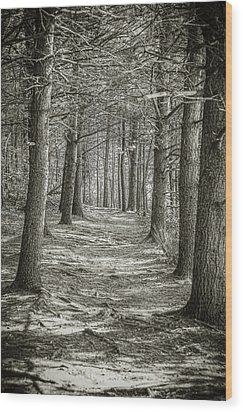 A Walk In Walden Woods Wood Print by Ike Krieger