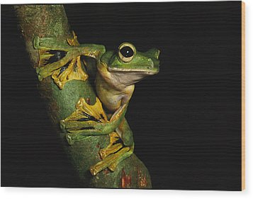 A Wallaces Flying Frog Wood Print by Tim Laman
