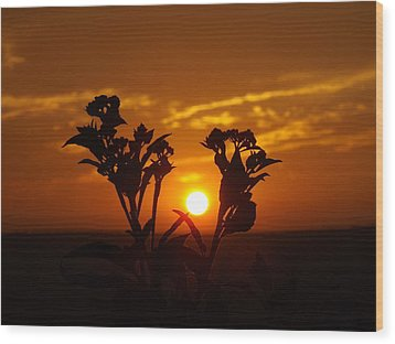 A Weed Sunset Wood Print by Rebecca Cearley