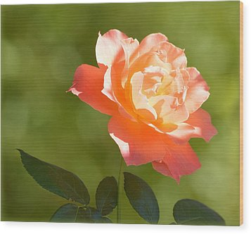 Wood Print featuring the photograph A Well Lighted Rose by AJ Schibig