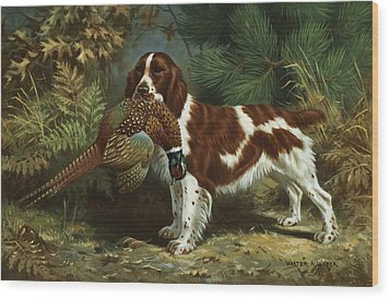 A Welsh Springer Spaniel Holds A Dead Wood Print by Walter A. Weber