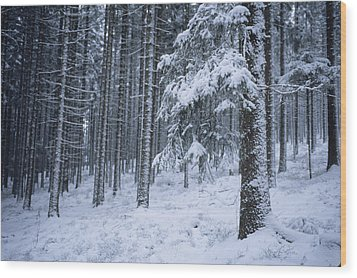 A Winter View Of The Wood Print by Taylor S. Kennedy