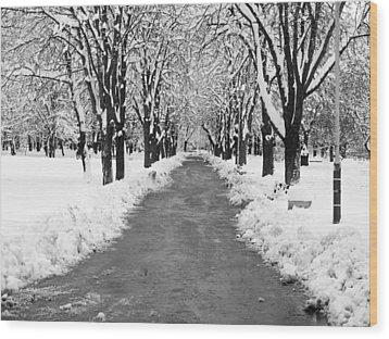 A Winter's Path Wood Print by Rae Tucker