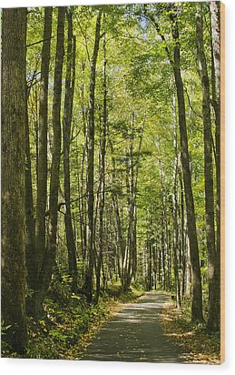 Wood Print featuring the photograph A Woodsy Trail by Wanda Krack