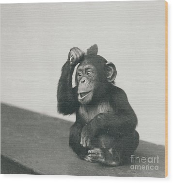 A Young Chimpanzee Playing With A Brush Wood Print