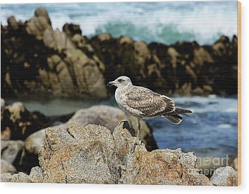 Wood Print featuring the photograph A Young Western Gull At Pacific Grove by Susan Wiedmann