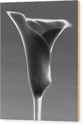 Abstract Calla Flower Wood Print