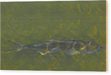 Abstract Fish 2 Wood Print by Carolyn Dalessandro