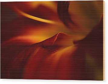 Abstract Floral Wood Print by Floyd Menezes