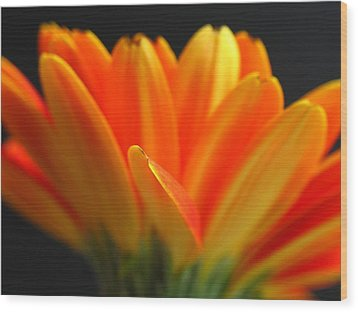 Abstract Gerbera Petals Wood Print by Juergen Roth