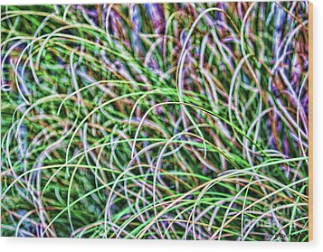 Abstract Grass Wood Print by Roberta Byram