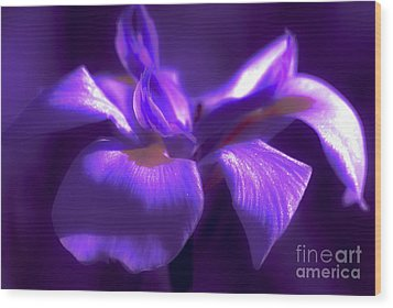 Abstract Iris Wood Print