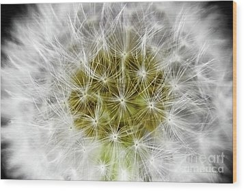 Abstract Nature Dandelion Floral Maro White And Yellow A1 Wood Print