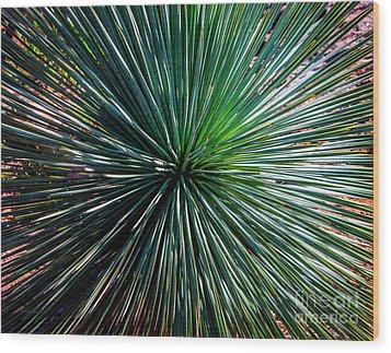Abstract Nature Desert Cactus Photo 207 Blue Green Wood Print