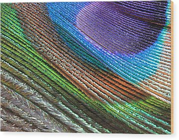 Abstract Peacock Feather Wood Print