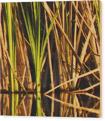 Abstract Reeds Triptych Top Wood Print by Steven Sparks