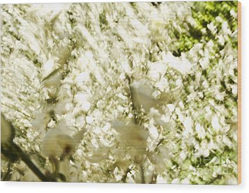 Abstract White Wood Print by Ray Laskowitz - Printscapes